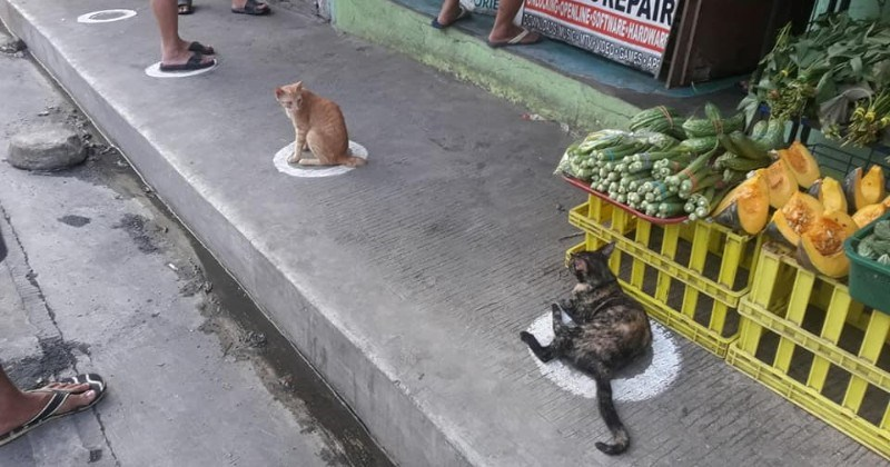 Stray Cats In The Philippines Were Spotted Occupying The Circle Marks In The Market