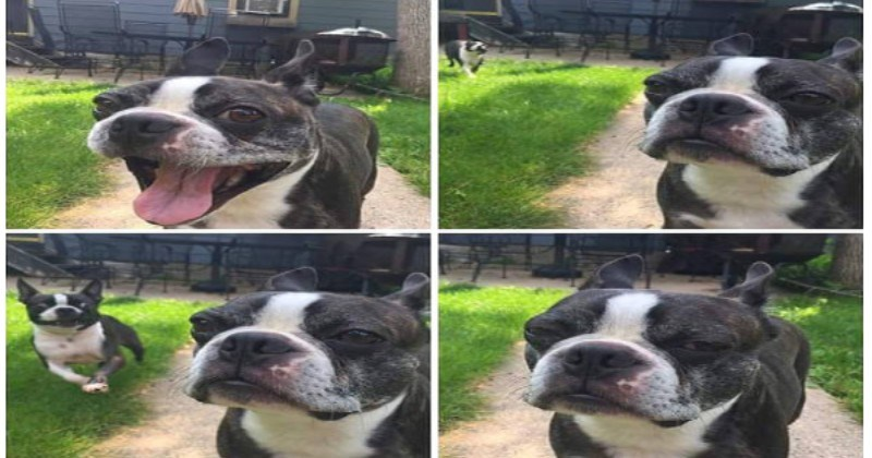 Poor Dogs That Are Not So Pleased With Their New Siblings