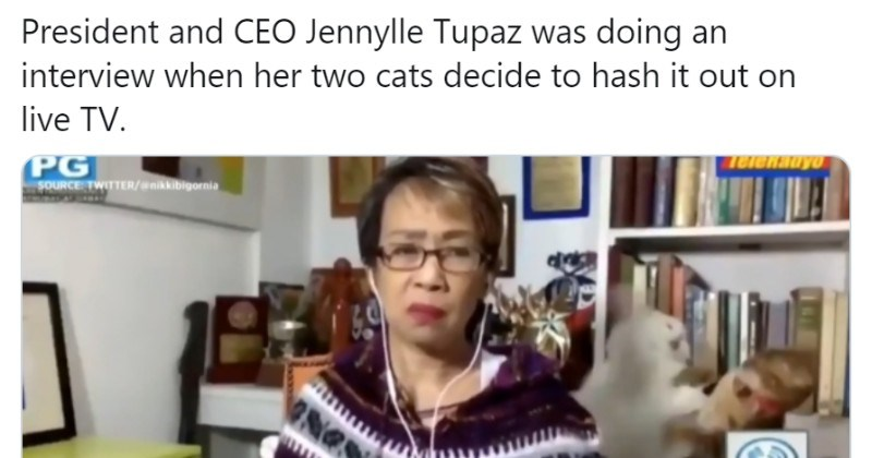Woman Deals With An Epic Fight Between Her Two Cats During Live TV Interview