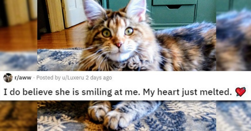 Heartwarming Photos Of Animals Smiling (22 Smiles)