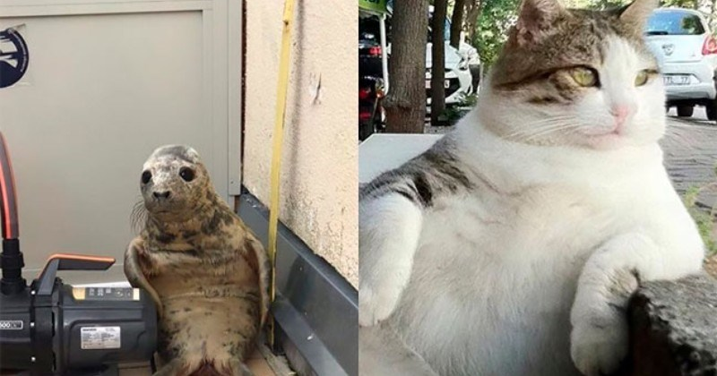 Seal Pup Who Tried To Escape The Rescue Center Gets The Photoshop Treatment