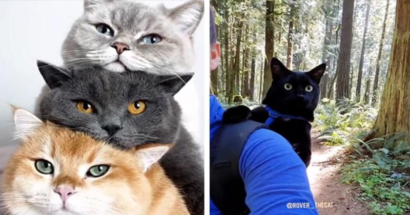 Overwhelming Cuteness Alert: Uplifting Cat Gifs (20 Gifs)