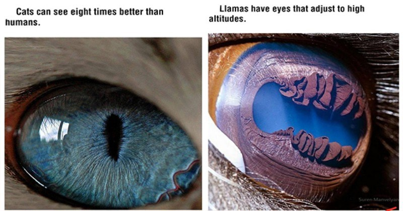 Animals And Insects Eyes And Facts (38 Pics)
