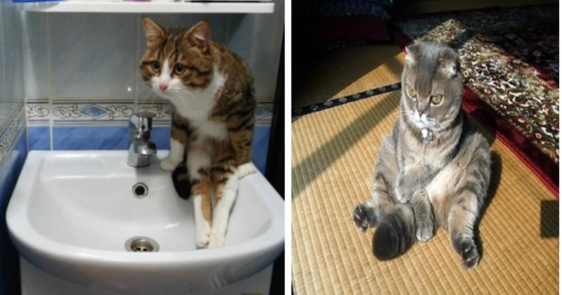 Some Cats Have Never Quite Mastered The Art Of Sitting Properly