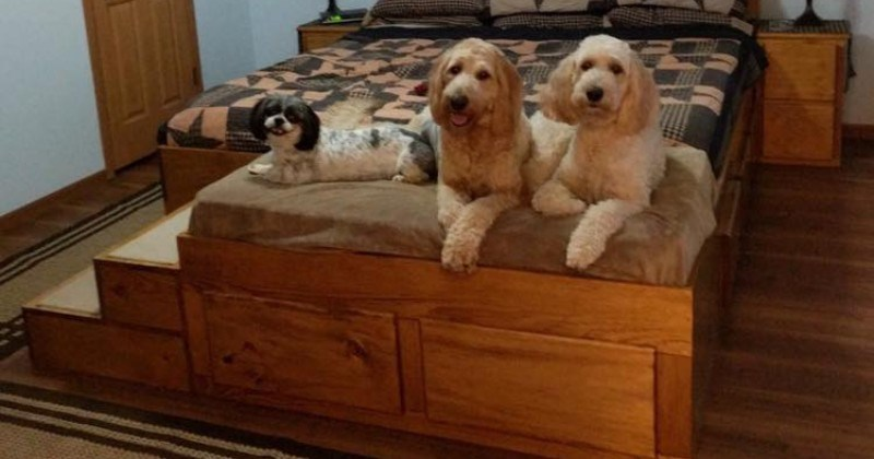 Furniture Manufacturer Creates Wooden Bed Frame With Built-In Bed For Your Pet