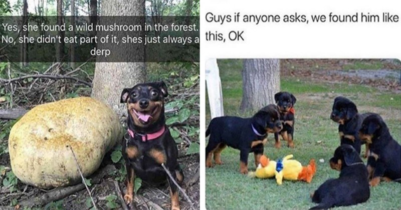 Hot Doggy Dog Doggo Memes (29 Memes)