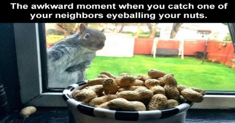 [Image: catch-one-neighbors-eyeballing-nuts-funn...of-peanuts]