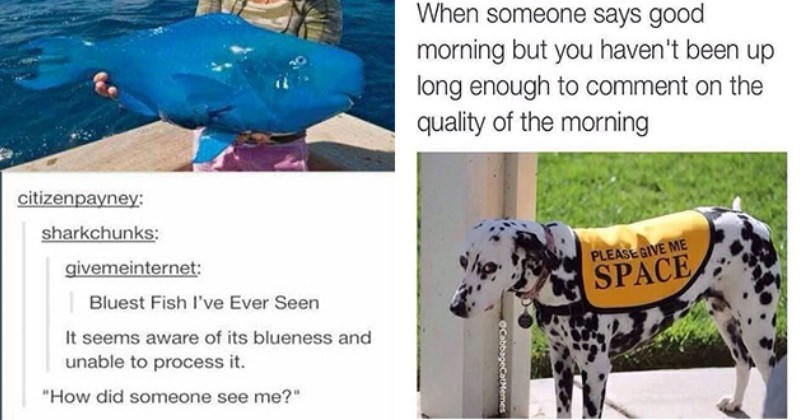 Mega-Mid-Week Animal Meme Collection (50 Memes And Pics)