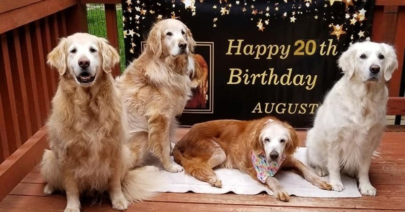 August Is The World's Oldest Golden Retriever At Age 20