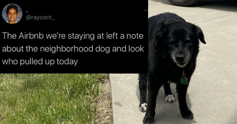 Wholesome AirBnB Has Neighborhood Dog Visitor