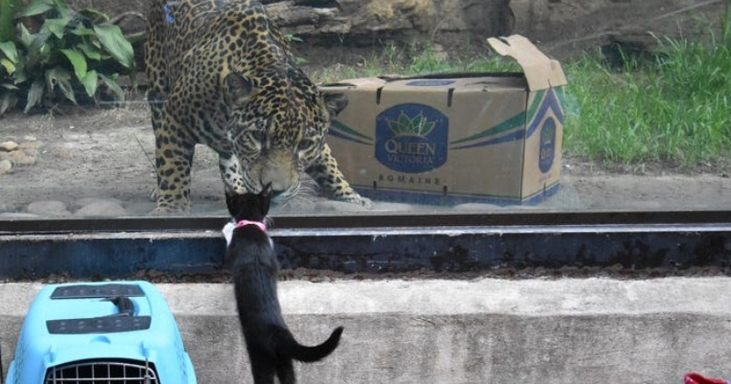 kittens dogs zoo adopt animals aww animal shelter san antonio texas animals hippo