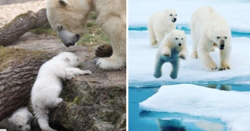 Un-Bear-Ably Cute Photos Of Momma Bears Teaching Their Cubs How To Bear