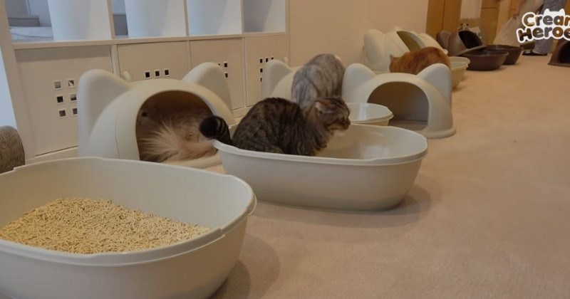 Seventh Heaven: Life With 7 Cats