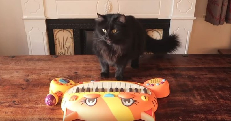 """Keyboard Of Meows"": YouTuber Creates Keyboard From His Cats' Vocals"