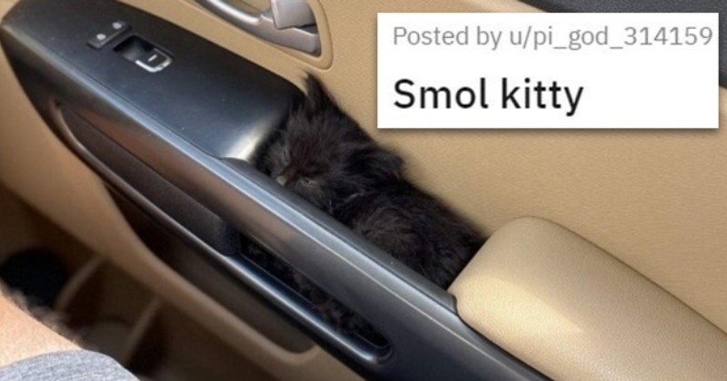 cute cuteness animals aww  baby animal cats dogs adorable pics wholesome uplifting | Smol kitty black kitten sleeping in a nook in a car door handle