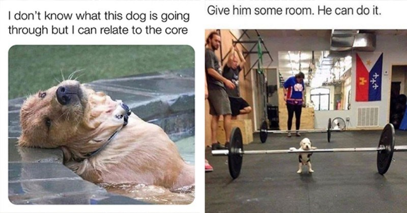 dogs doggo memes funny doggos dog lol aww cute wholesome animals silly humor | don't know this dog is going through but can relate core funny dog lying back in a pool | Give him some room. He can do tiny puppy weightlifting at the gym