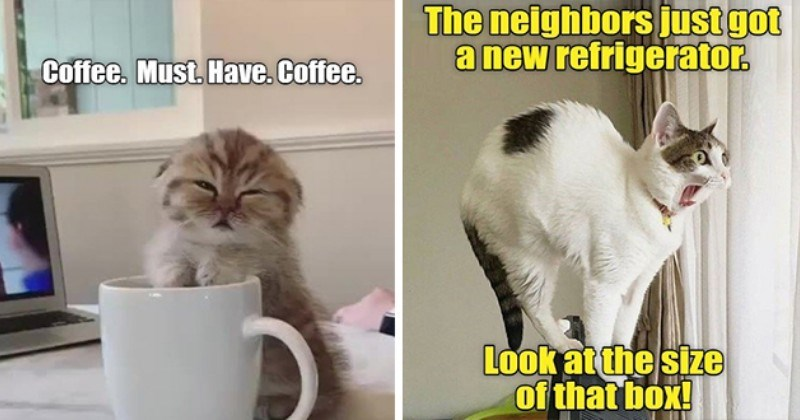 lolcats lol cat memes funny original new fresh hot aww cute adorable animals cats wholesome | Coffee. Must. Have. Coffee. tired kitten leaning against a mug | neighbors just got new refrigerator. Look at size box! shocked cat