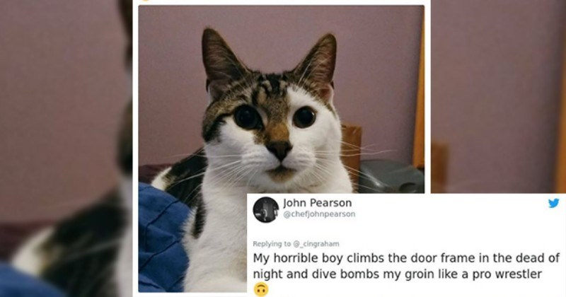 world's worst cat tweets cats funny lol hilarious twitter animals aww cute | John Pearson @chefjohnpearson Replying _cingraham My horrible boy climbs door frame dead night and dive bombs my groin like pro wrestler
