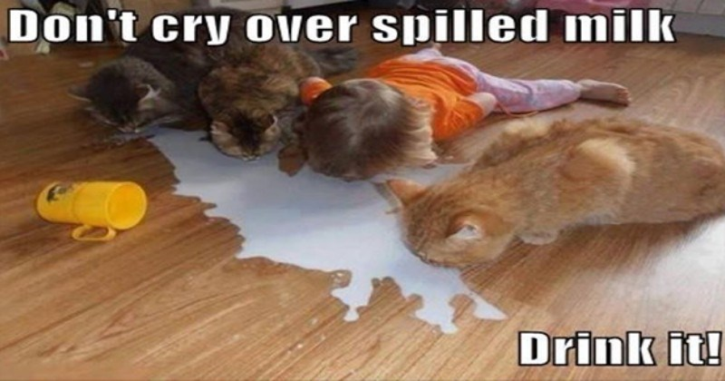 the best newest cat memes created by i can has cheezburger users - thumbnail includes three cats and a little girl drinking spilled milk from the floor