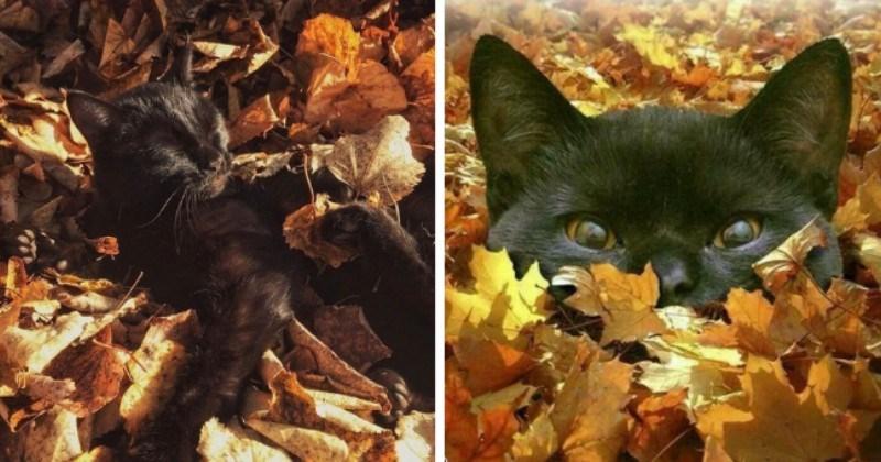 Chill Cats Enjoying The Autumn Vibes