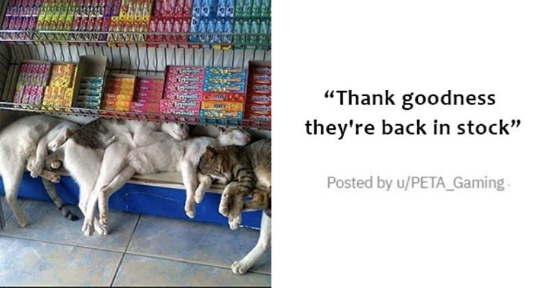 """medley of cute, funny cats - thumbnail of cats sleeping on bottom shelf of grocery store """"Thank goodness they're back in stock"""""""