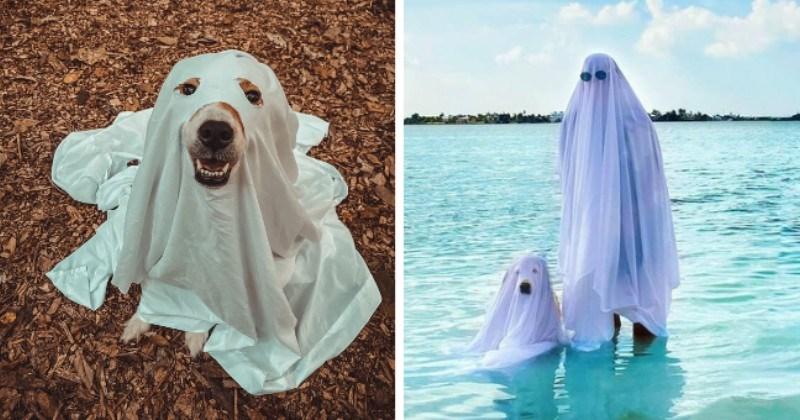 Adorably Spooky Ghost Doggos