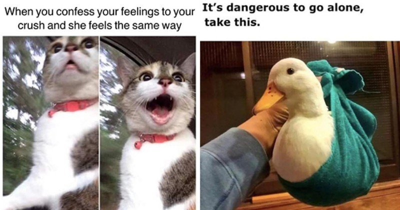 "wholesome adorable animal memes to uplifting spirits - thumbnail includes two images, one of smiling cat ""When you confess your feelings to your crush and she feels the same way"" and one of a duck wrapped in towel, ""It's dangerous to go alone, take this."""