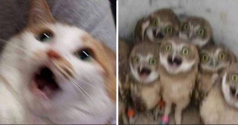 Blurry Mid-Scream Animals Pics