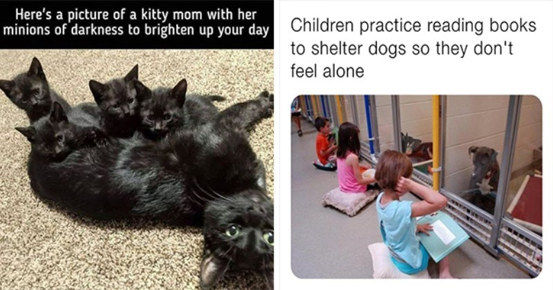 weeks best and cutest wholesome animal memes - thumbnail includes image of kitty mom with her minions of darkness and an image of children reading books to shelter dogs