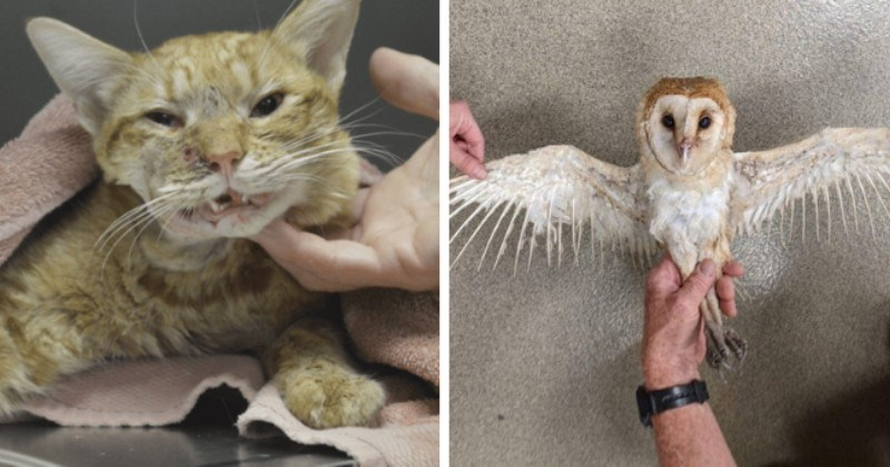 Heroes Of The Month: Celebrating Rescued Animals And Their Rescuers (November 2020)