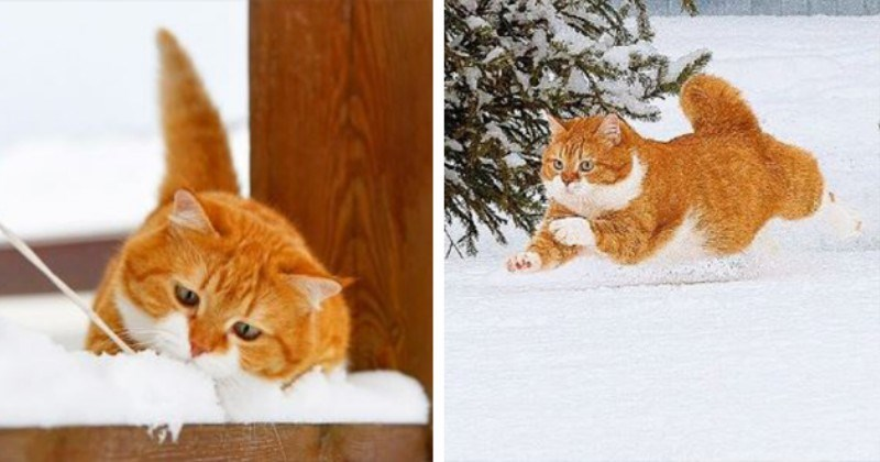 Animals Of Instagram Spotlight Of The Week: Ginger, The Snow-Loving Cat