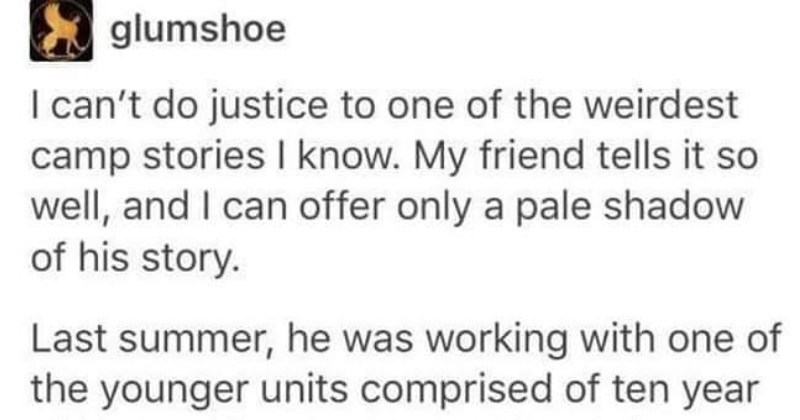 "Tumblr Story: The Saga of ""Me Boy"" The Camp Zucchini"