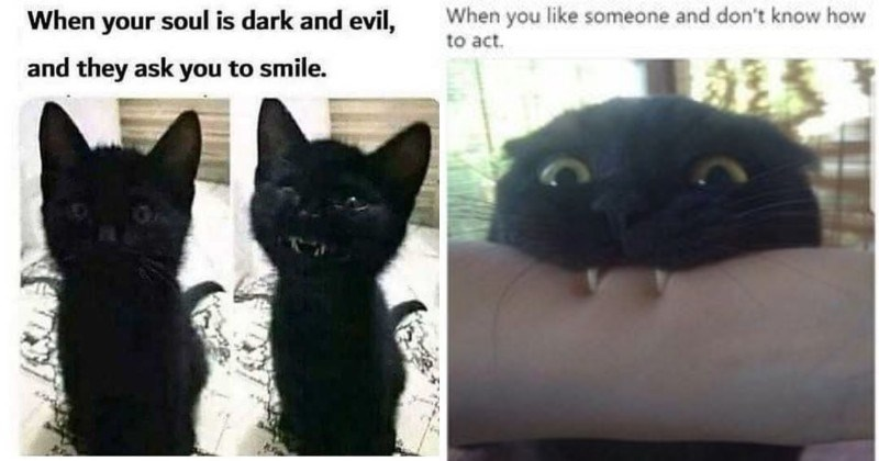 12 Memes to Remind You That Black Cats Are Not Evil