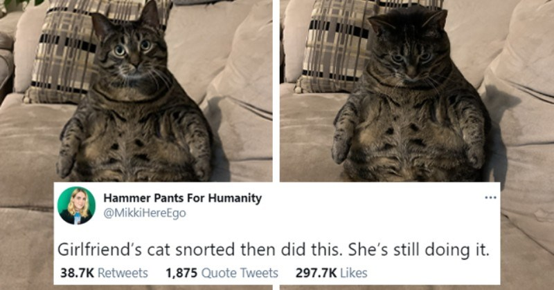 Weekly Treat: Animal Tweets (February 22, 2021)