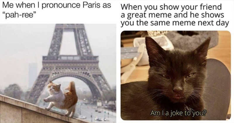 weeks hottest and newest cat memes - thumbnail includes two images - one of a cat in front of the eiffel tower and one of an annoyed-looking black cat
