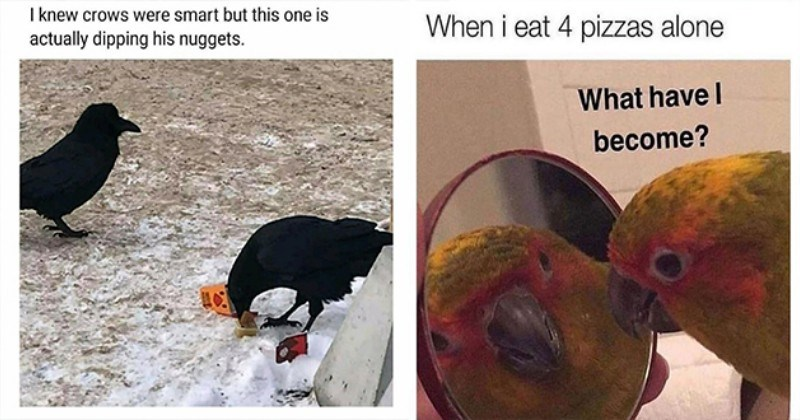 fresh animal memes - thumbnail includes two memes - one of two crows one dipping chicken nuggets and one of a bird looking at its reflection in the mirror