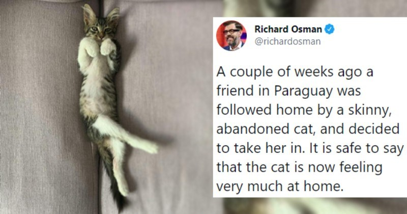 Heartwarming Tweets Of Rescued Pets Finally Feeling At Home