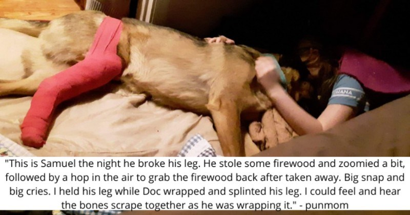 Heartwarming Recovery Story Of Dog That Broke Its Leg From Overexcitement