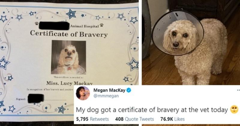 Twitter User's Dog Gets 'Certificate Of Bravery' At The Vet's