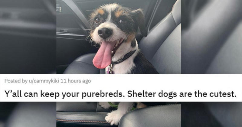 "all the newly adopted rescue animals of the week - thumbnail of smiling dog in car ""Y'all can keep your purebreds. Shelter dogs are the cutest."""