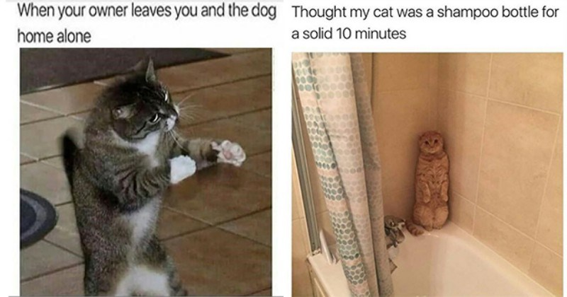 Cat Memes For Days On This Fine Caturday