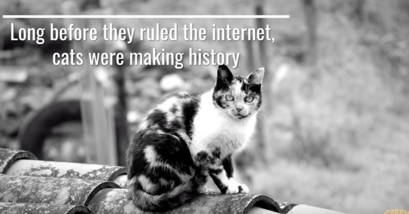 8 Cats That Made History