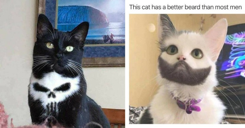 15 Cats With Strange and Unique Fur Markings