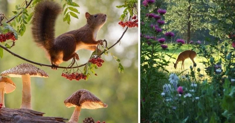 Woodland Animals Straight from a Fairy Tale (12 Photos)