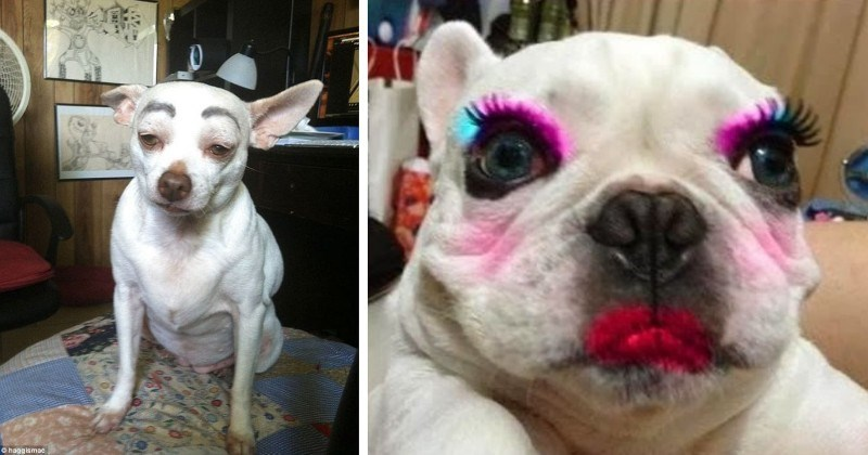 12 Ridiculous Photos of Pets Wearing Makeup