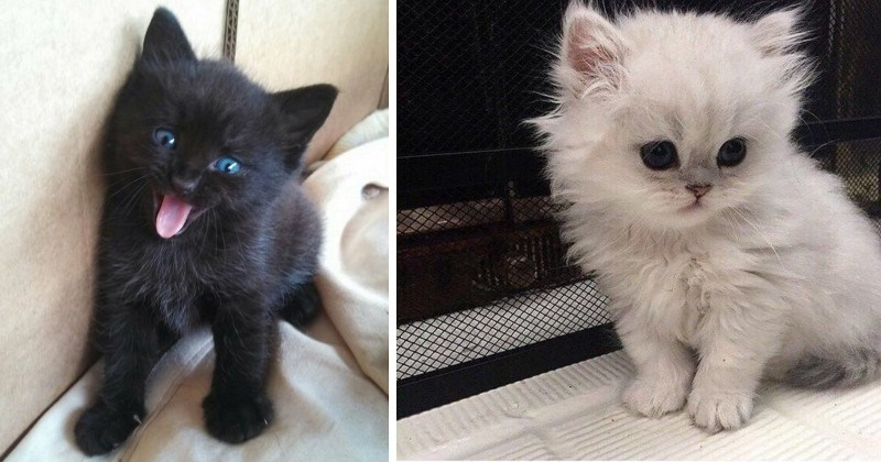 15 Adorable Photos of Heart-Melting Kittens