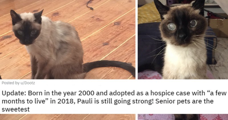 Before And After Adoption: Heartwarming Animal Glow Ups