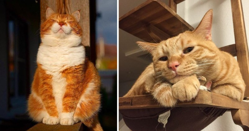 An Ode to Ginger Cats (10 Adorable Photos)