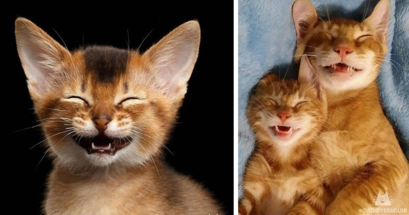 10 Photos of Happy Cats To Brighten Your Day