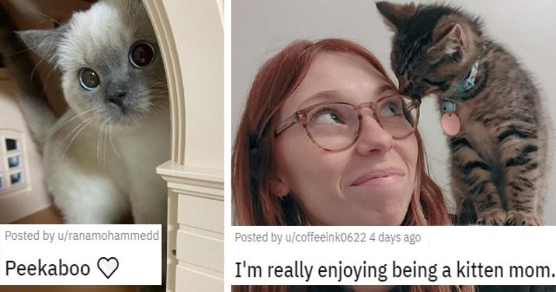 Cat Medley: Cuteness Galore, Funnies, Birthdays, And Appreciation